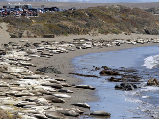Elephant seals bask in the sun on the Piedras Blancas beach near San Simeon in this 2013 file photo. On Thursday, President Barack Obama expanded the territory of the California Coastal National Monument, which includes Piedras Blancas and five other sites with more than 6,000 acres to the national monument area that includes islets, reefs and rock outcroppings spanning much of the California coastline.