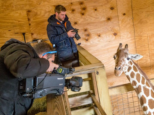 Scott Swinamer, left, and Michael Sands, right, take photos and video of April the pregnant giraffe for RVSA Advertising at Animal Adventure in Harpursville on Monday, March 17, 2017.