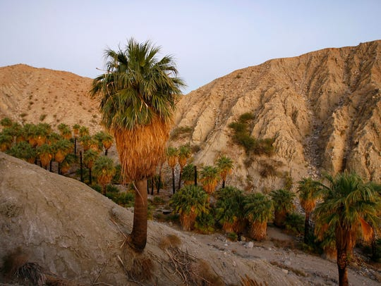 A natural spring-fed desert oasis is one of many supporting