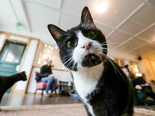 Cat cafes, like New Lives Cat Cafe in Indianapolis