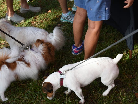 Dogs surround the human audience in the dog park. Monday morning, the Marco Island Fire-Rescue Dept. launched their Emergency Pet Care program, and demonstrated canine CPR, in a presentation at the Mackle dog park.