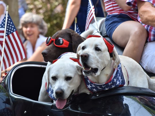 There's plenty of canine cuteness at most Fourth of
