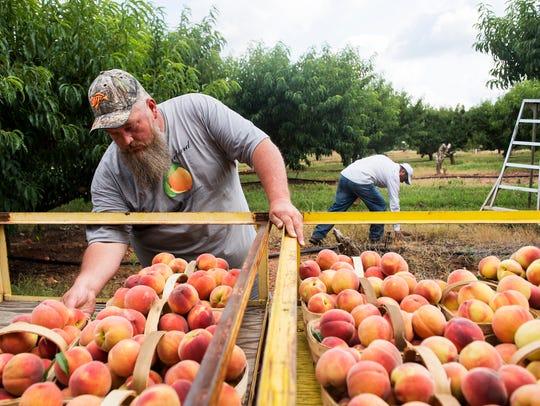 Mark Fisher, a fourth generation peach farmer, organizes