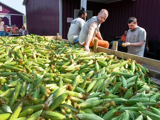 Henderson County Detention Center inmates, shucking a 3,000 lb. wagon of sweet corn Tuesday. The detention center has nearly 25 acres of vegetables producing thousands of pounds of produce for the center and local non-profits, July 18, 2017.