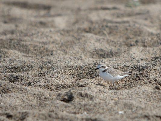 Ormond-Beach-Steward-03.JPG