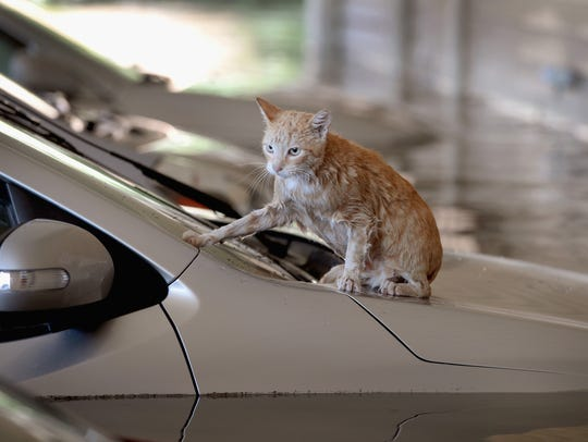 A cat sits on top of a car which is surrounded by flood