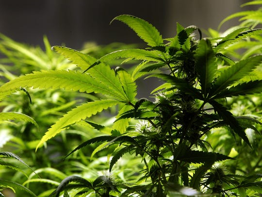 Regular pot consumers might to notice subtle changes at their local dispensaries.