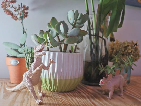 Succulents and dinosaurs in the kitchen and dining