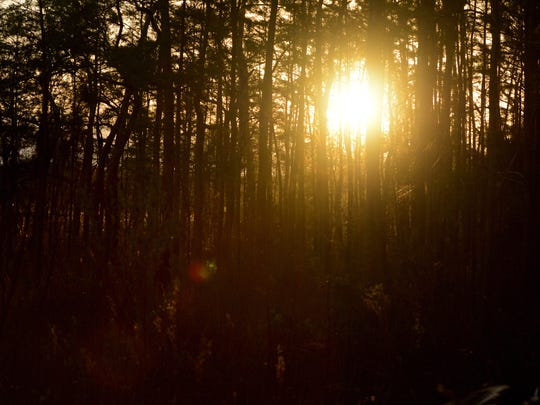 Sunset through the cypress trees along Jane's Scenic Drive. The Fakahatchee Strand Preserve State Park, 30 miles east of Naples, offers many options to get close to nature.