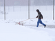 A person walks his dog during Tuesday snow fall in