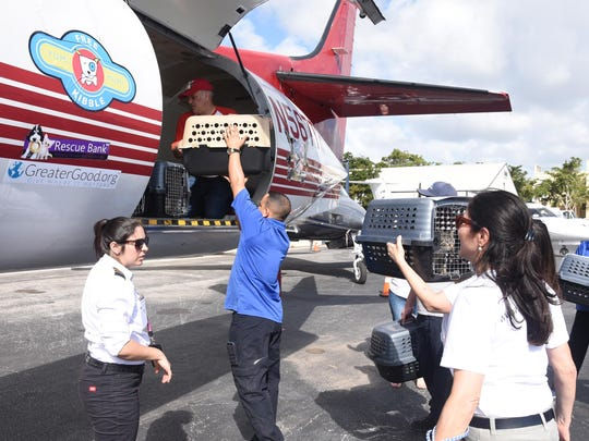 Pets being unloaded from the plane in a previous Flight