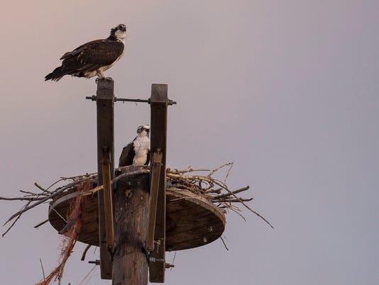 FTC0419-BirdsOfFortCollins