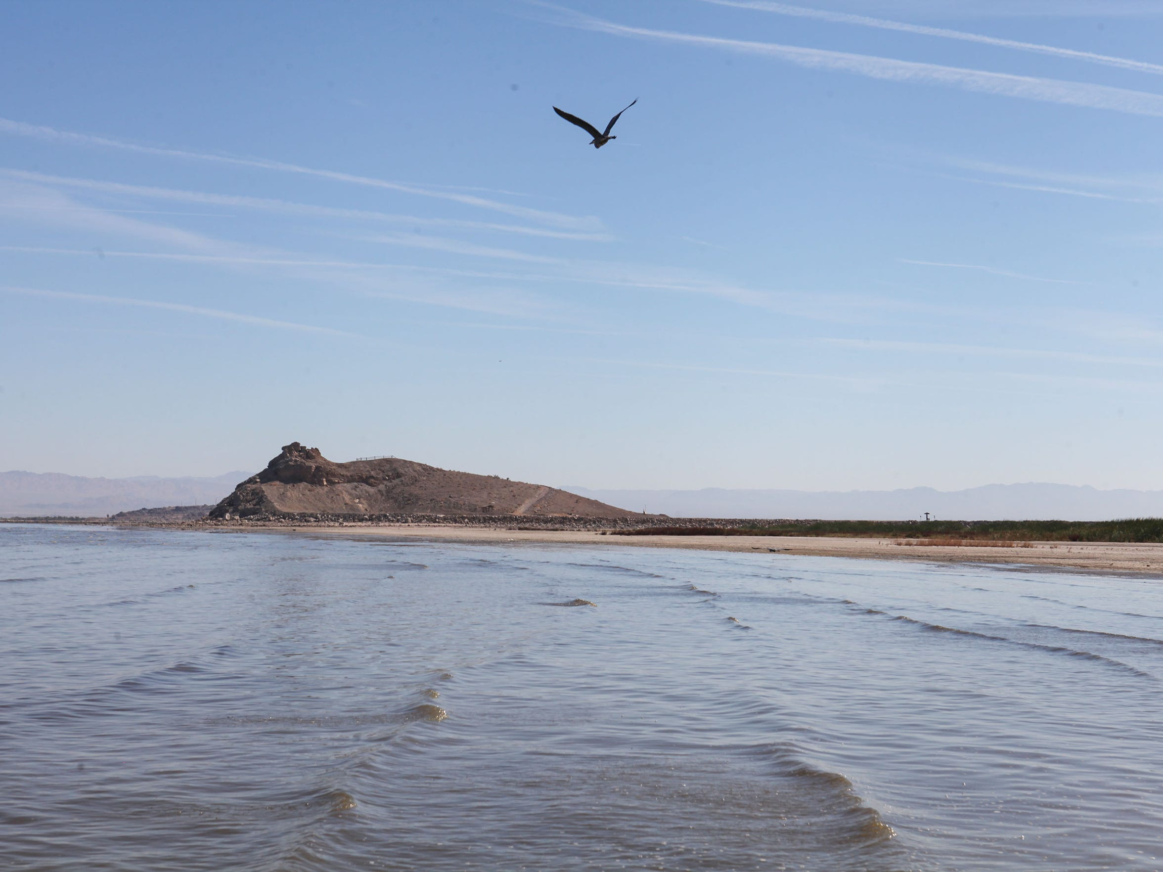 A bird flies along the retreating shoreline of the Salton Sea.
