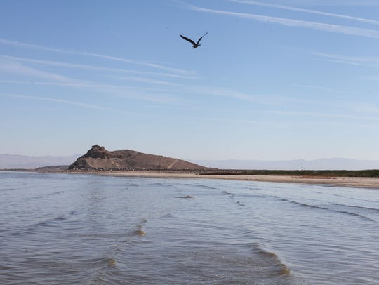 A bird flies near one of the small volcanoes at the Salton Sea in June 2018. FILE PHOTO