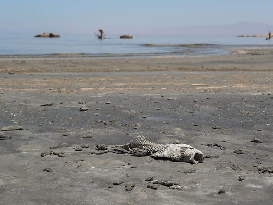 636644935985218293-salton-sea-dead-fish.jpg