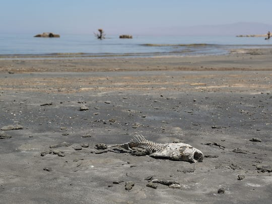 A dead fish on the shoreline of the Salton Sea near