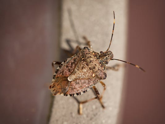 Protect Your Home From Summer Pests