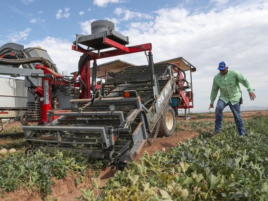 Andrew Fisher of Fisher Ranch looks over the mechanized melon picker used to harvest cantaloupes and meant replace traditional workers at their farm in Blythe, Ca., July 9, 2018.