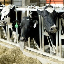 Manitowoc County is home to more cows than people.