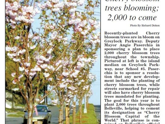 A 2001 clipping from the Belleville Times shows Belleville Township officials plan to plant 2,000 cherry blossom trees and mandate new development include the species in its plans.