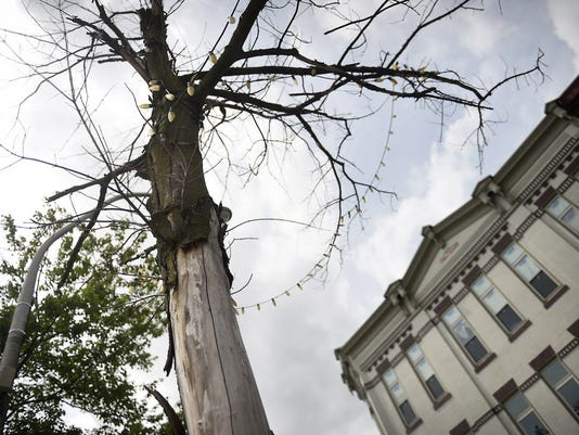 Lebanon's Shade Tree ordinance requiring replacement of dead trees in the public right-of-way, like this one on Cumberland Street, has been amended to give enforcement authority to the Department of Public Works.