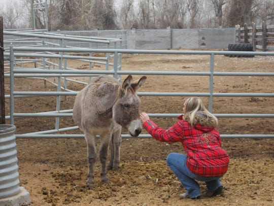 Jessica Hofer greets Dudley, a donkey new to the equine