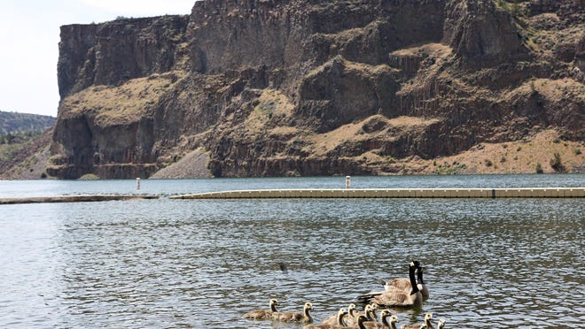 A health advisory has been issued because of a bloom of toxin-producing algae at Lake Billy Chinook near Madras.