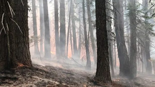 Smoke settles in as firefighters secure the fireline at the Red Salmon Complex on Wednesday, Aug. 12, 2020.