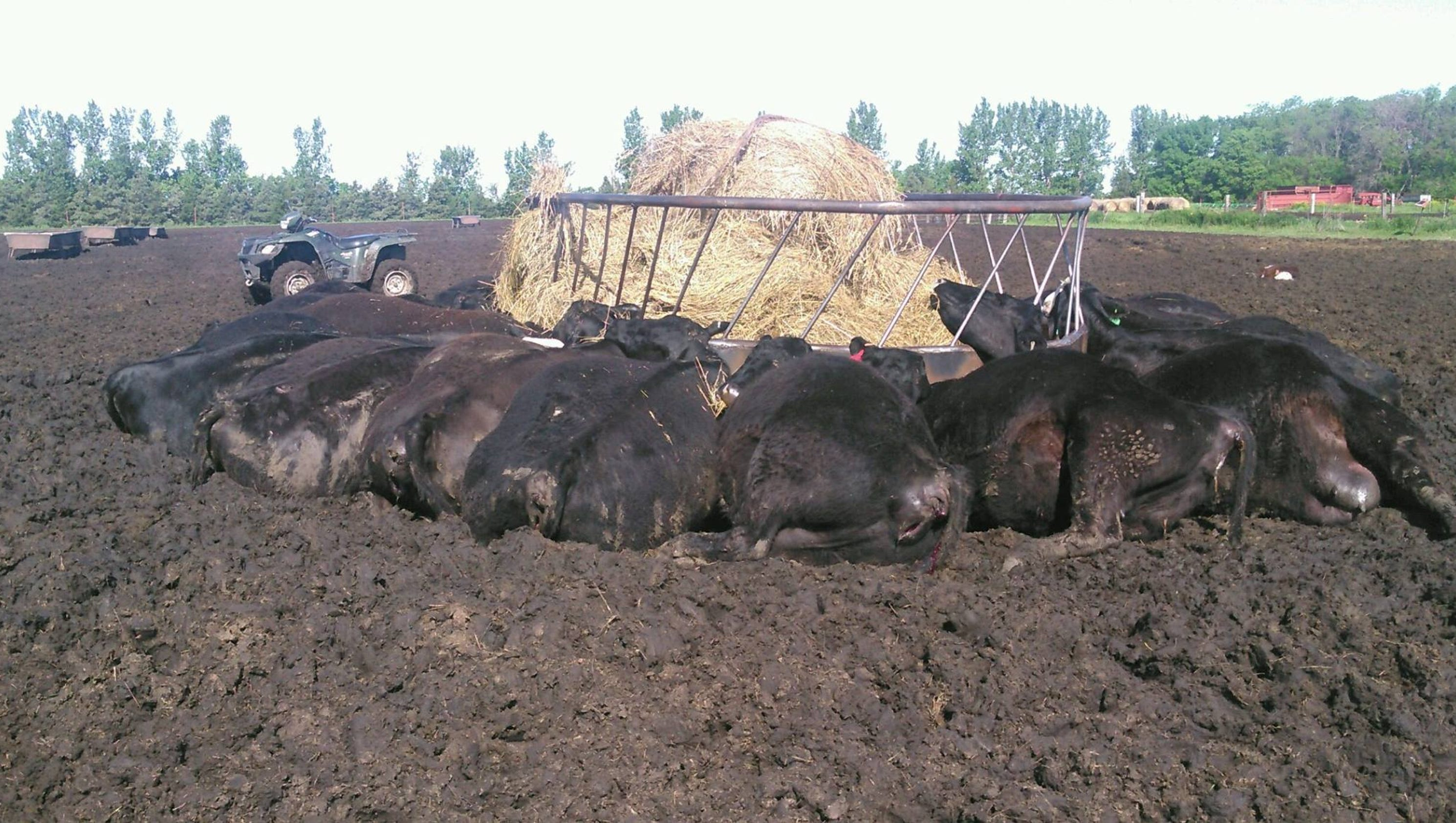feeder for steel product index sioux grain hay and detail cows