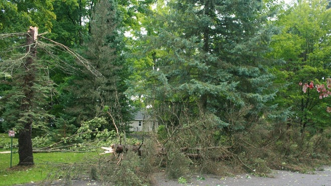 This tree on Bennett Lane in the town of Townsend in northwest Oconto County was snapped off in high winds Thursday.