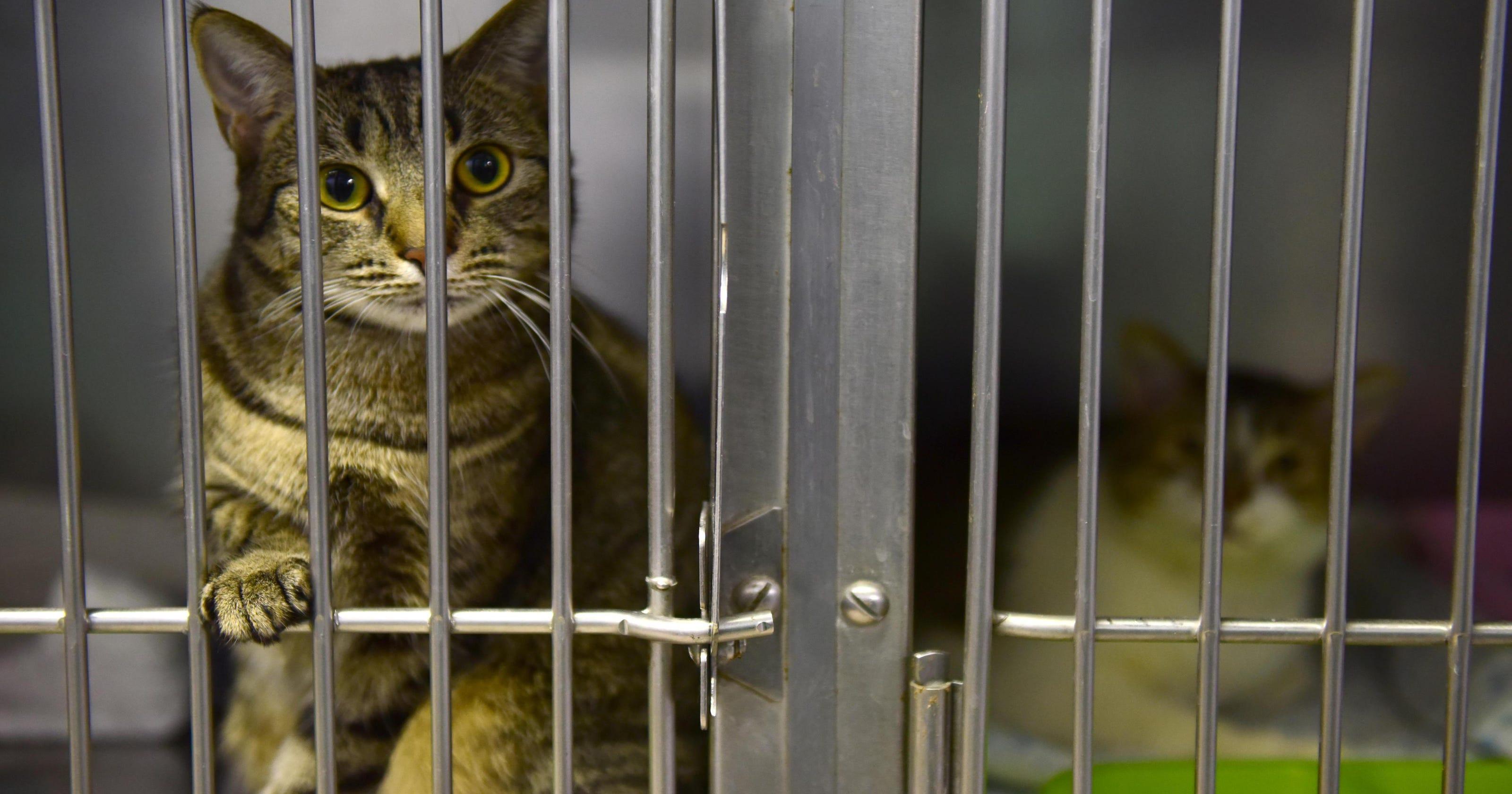 Adopt A Declawed Cat Nj The Best Image Cat Imagezap Co