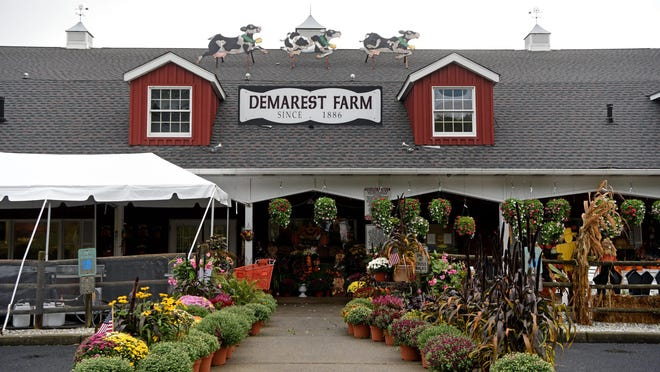 Demarest Farms in Hillsdale makes apple cider donuts daily in three varieties, cinnamon and sugar, plain and powdered sugar. On fall weekends they sell several thousand donuts.