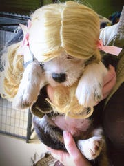 """""""Blondes Have More Fun"""" by Caitlin Morrow won the Puppy"""