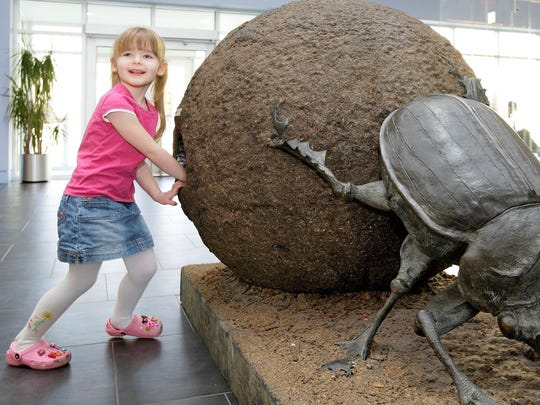 This model of a dung beetle ball at the Delaware Museum of Natural History dares visitors to be the first to stick their hands into the holes made in the side to see what lurks inside.