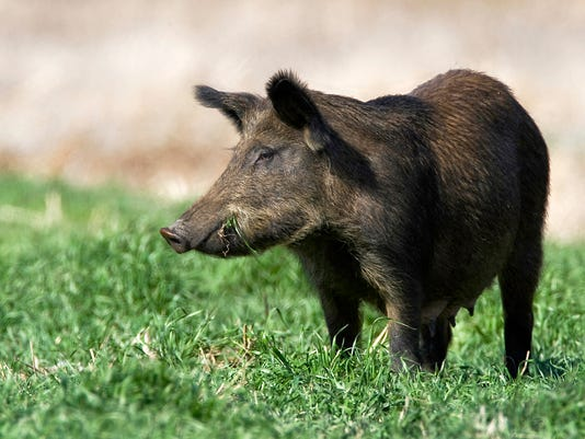 wild hogs.jpg