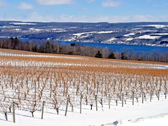 ELM_022315_WinterVineyard_prov.jpg