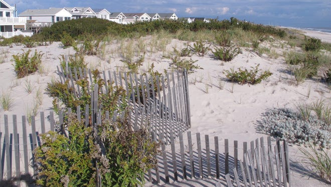 These 25-foot-tall dunes protect homes in the Midway Beach section of Berkeley Township.