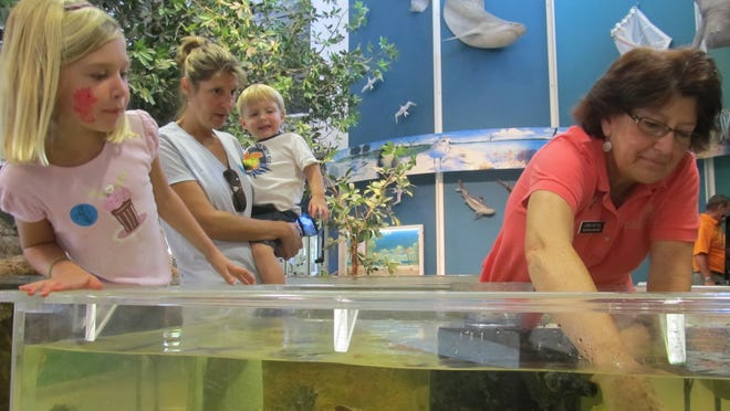 Linda Detzel pulls a calico crab from the Environmental Learning Center aquarium at Rookery Bay in this file photo.