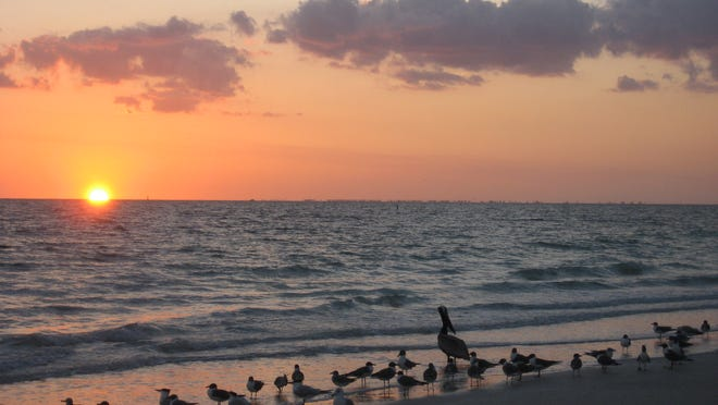 A variety of birds and other wildlife can be seen at Lovers Key State Park.