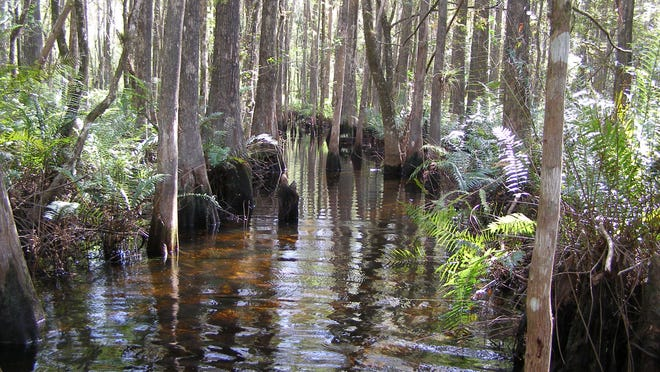 Get back to nature and relax at the Six Mile Cypress Slough Preserve.