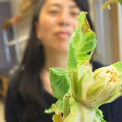 Yolanda Chen, a professor at UVM's Department of Plant