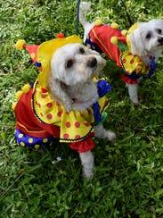 Daisy and Holly clowning around .