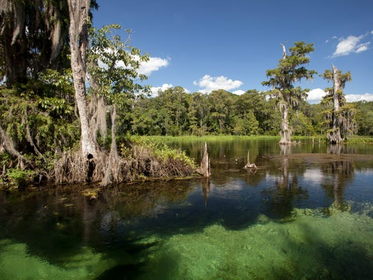 The Wakulla Springs features hiking trails, bout tours