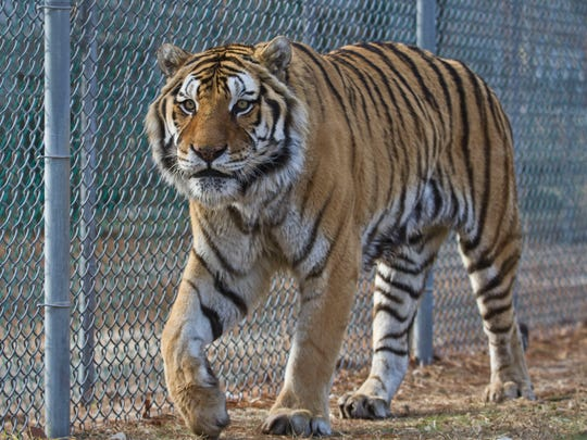 Popcorn Park Zoo is a wildlife rescue animal sanctuary offering refuge for various animals in need.