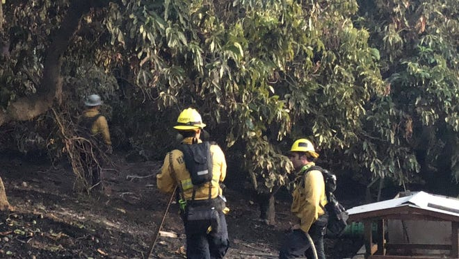 Firefighters were on scene of a blaze in an avocado orchard Wednesday afternoon near Fillmore.