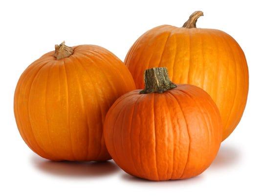 TDS NBR 1120 Fresh Pick Pumpkins