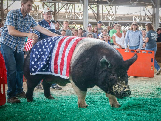 Big Buck, the 2017 winner of the Big Boar contest, enters the ring with a U.S. flag over his back on Thursday, August 10, 2017, during the Iowa State Fair in Des Moines.