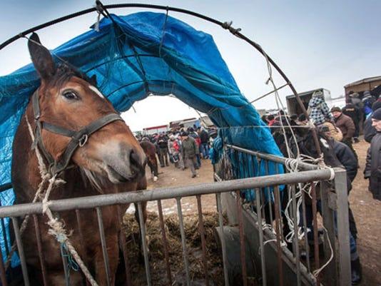 horsemeat1