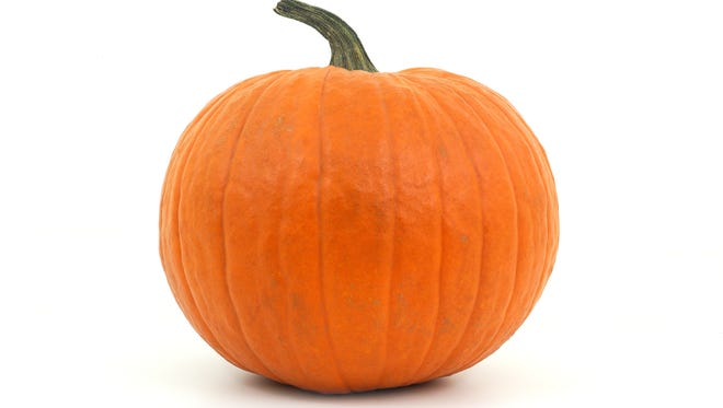 big pumpkin in studio on white background for halloween or thanksgiving