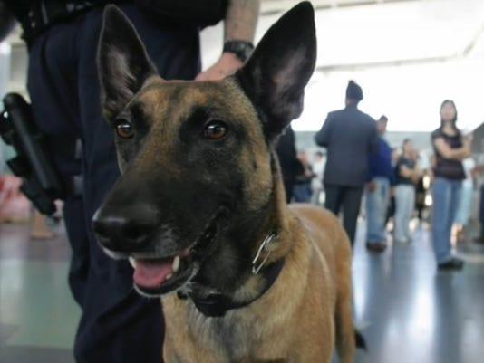 635496708291884128-police-dog